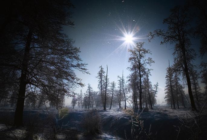 Деревья природа снег лес зима