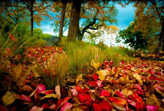 На рабочий стол осень листва природа