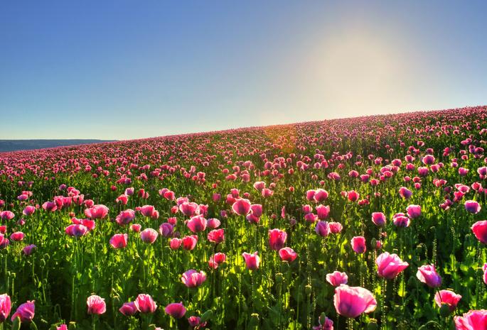 Поле цветы фото обои природа