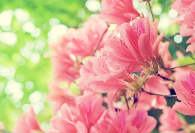 скачать обои рабочего стола весна: