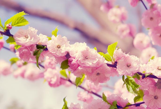 картинки на экран рабочего стола весна № 478066  скачать