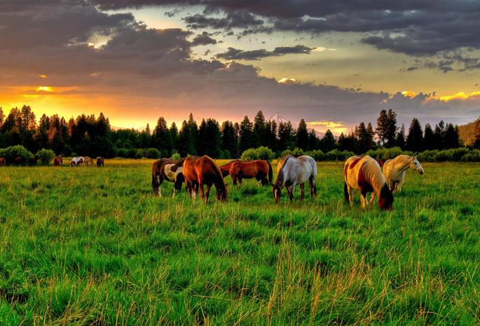 Обои кони 27 обои лошади 38 обои поляна 97