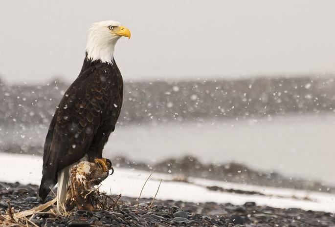 картинки горы орел