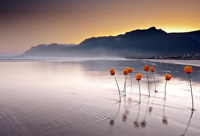 Обои цветы 1434 море обои закат 507
