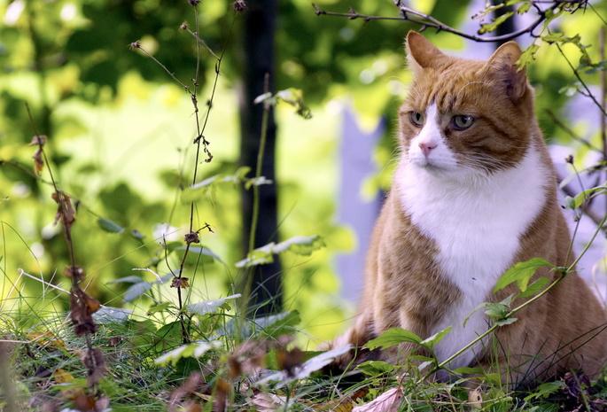 Обои кот 435 обои природа 1436 обои