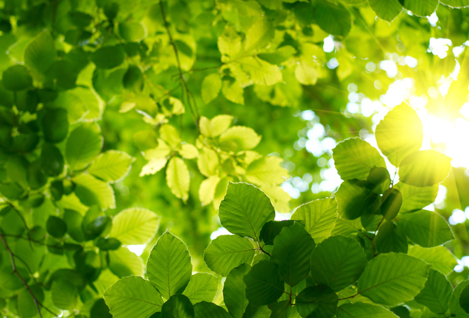 484 обои листья 698 обои весна 383 обои