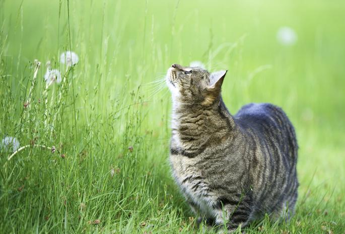 109 обои кошка 354 обои кот 338 обои вверх 9