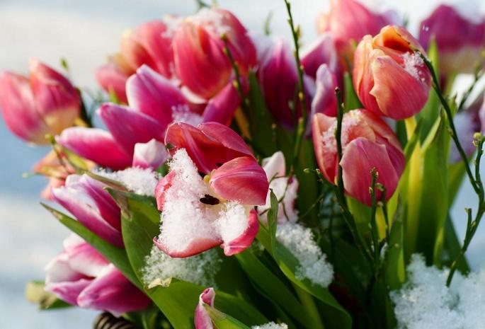 Снег обои весна 382 обои цветы 1422