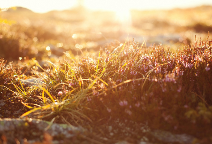 light, macro, боке, свет, bokeh, grass, трава, Макро ...: www.allfons.ru/macro/19903-light-macro-boke-svet-bokeh-grass-trava...