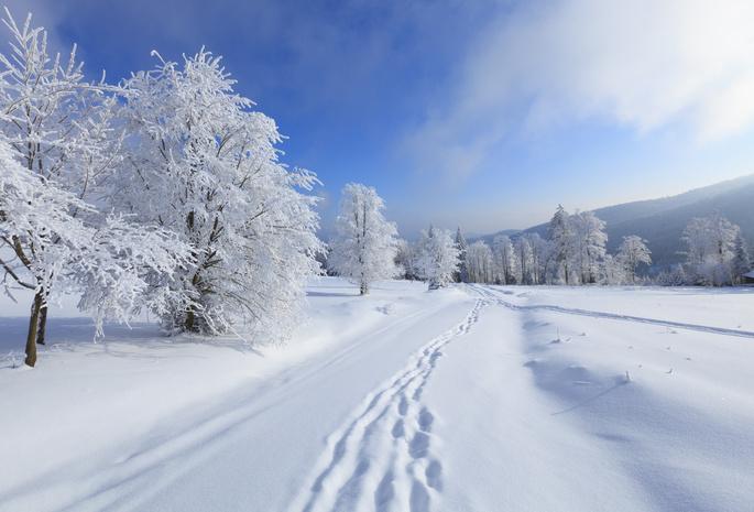 Природа обои зима 437 обои деревья 754