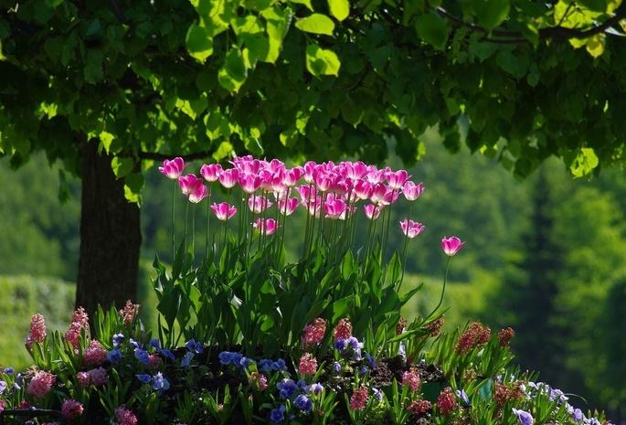 1321 обои тюльпаны 129 обои зелень 326 обои
